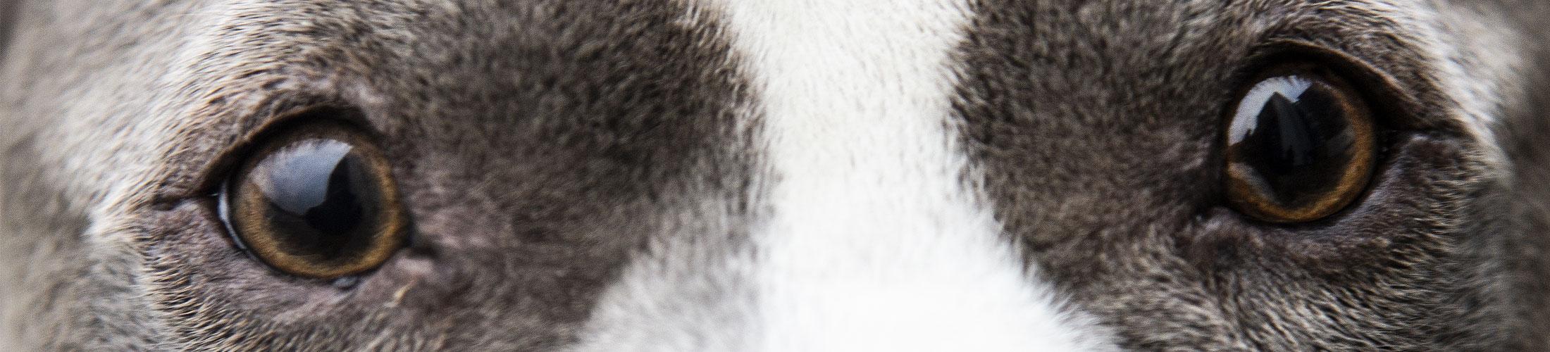 oejenlaege-hund